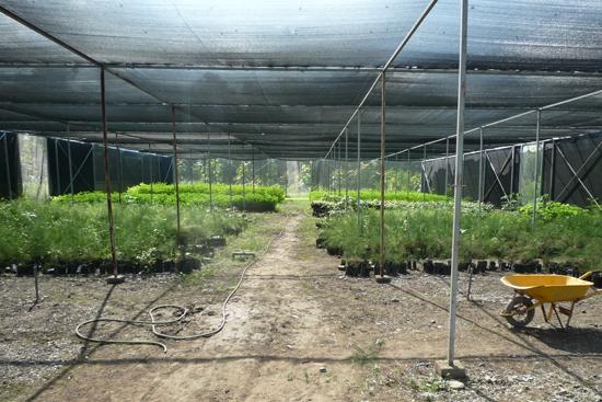 苗木を育てている施設