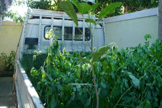 トラック一杯の苗木
