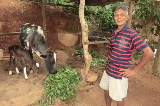 KGサラットさんのお父さんと牛と最近生まれた子牛