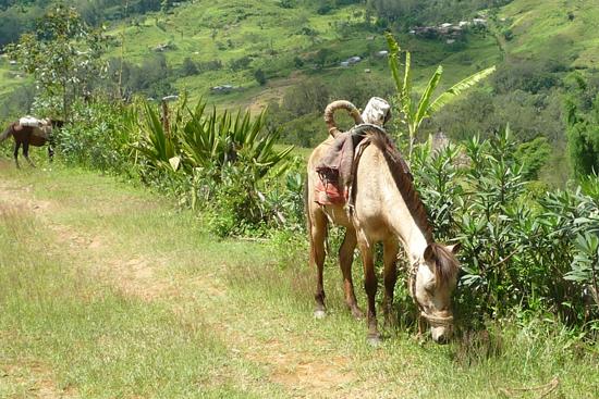 家から遠い人は、馬に乗ってきます