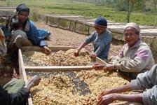 東ティモール フェアトレードコーヒー生産者を訪ねる旅