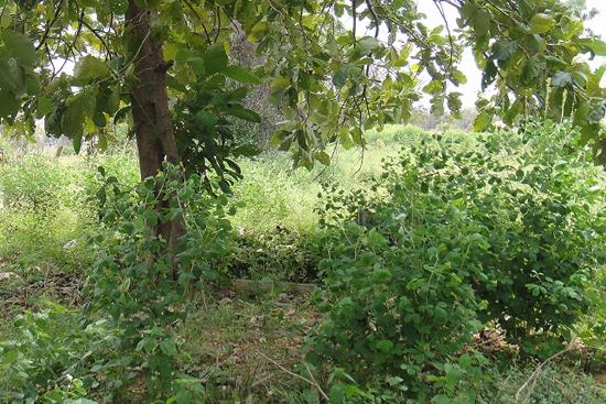 草むらの中に埋もれてしまっている過去の井戸