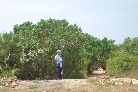 A9道路沿いで今もつづく地雷除去作業