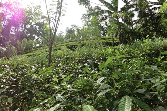 スリランカ南部ツアー2013
