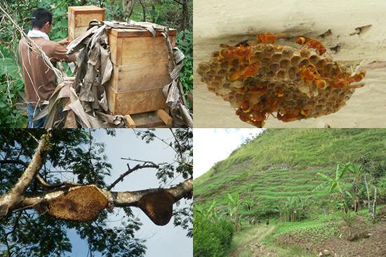 東ティモール 養蜂の風景