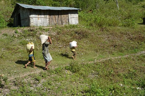 コーヒーの実(チェリー)を加工場まで運ぶ家族