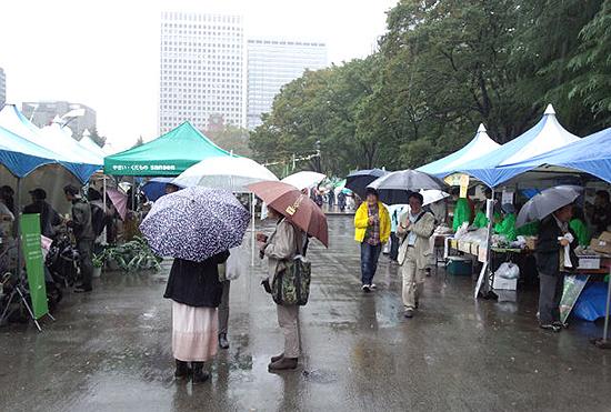 11月20日。朝からあいにくの雨。