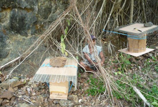 ルスラウ集落にて。近くに自然巣があり、ブンコと重箱式巣箱を1基 ずつ設置。