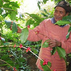 東ティモール コーヒー生産者を訪ねるスタディーツアー2014 イメージ
