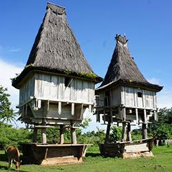 東ティモール 大自然と食文化を訪ねるエコツアー2014 イメージ