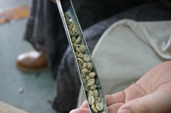 さし棒で麻袋内のコーヒー豆の状態をチェック