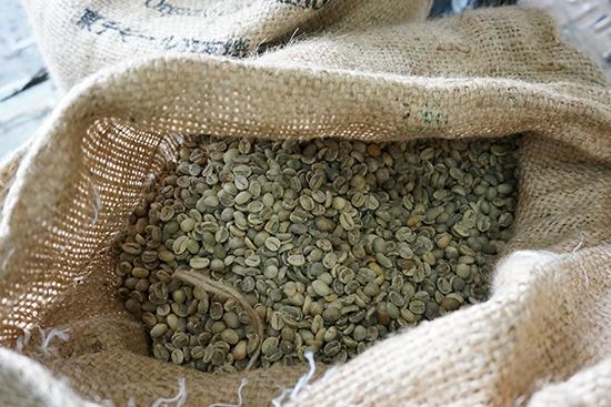 麻袋を開けて2013豆のでき具合を確認