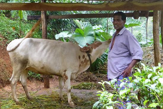 ニマルさんとニマルさんの牛。監査員はコンポストを作っている場所もチェックします。