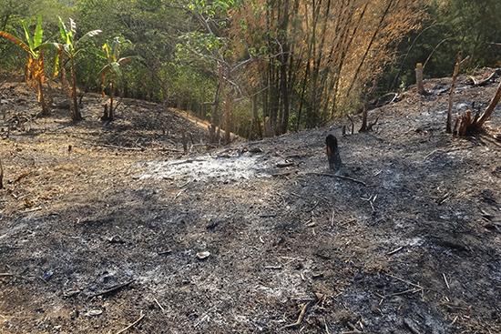 従来は草木を燃やして畑を綺麗にする。灰(黒い部分)が貴重な肥料分となる。