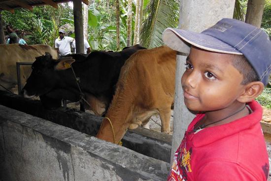 家にいたお母さん牛(子牛はまだ家にいます)をセンターに連れてきたプレマラトネさんの息子。 家族のような存在の牛と離れるのを寂しがっています。