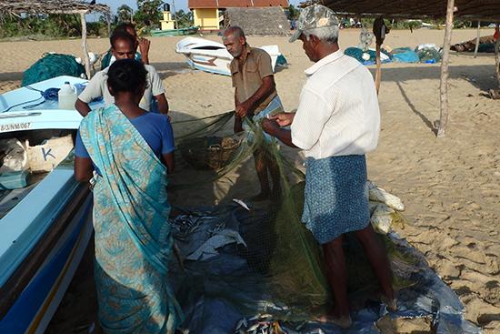 浜には漁師さんたちで獲れた魚を網から外す作業をしています。