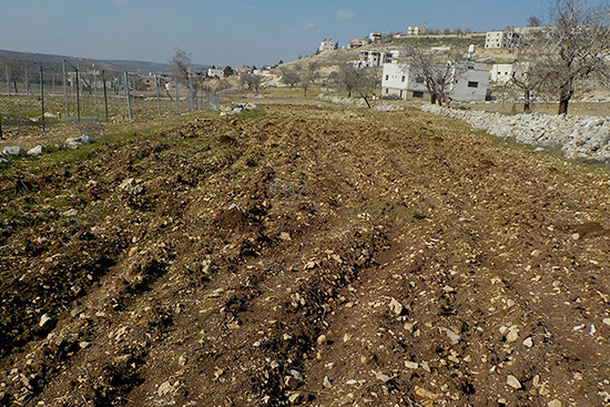放置されていた土地を、今回オリーブの植樹に向けて農家さんが整備。
