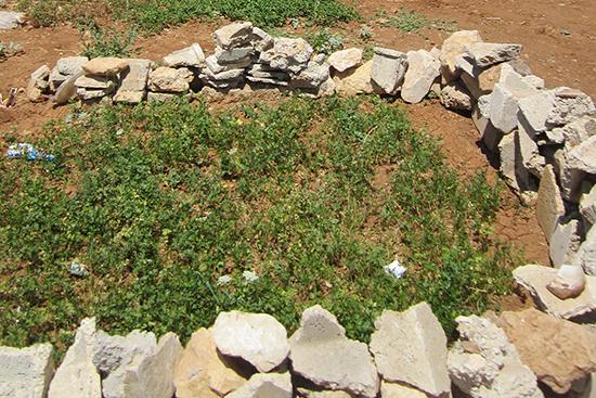 家の前の土地を家庭菜園用に区切って使用。