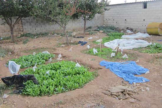 4世帯が住む建物にある土地を、4分割してそれぞれの世帯が野菜を栽培している。どの世帯も女性達が家庭菜園を担当。
