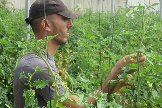 再建した温室で農業を再開した農家さん