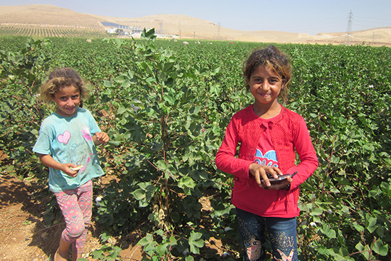 1つ1つ綿を積む作業に子ども達も朝から日没まで仕事をしています