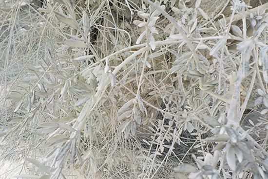粉塵被害を受けたオリーブの木(ジャマインの農地にて)