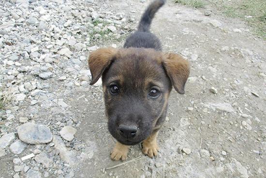 これが襲い掛かってくるという凶暴な犬、ではなく道にいた子犬。かわいさだけでできている。