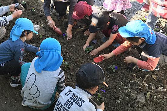 保育所の子どもたちとパンジーの植え付け
