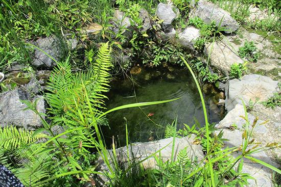 集落内にある水源