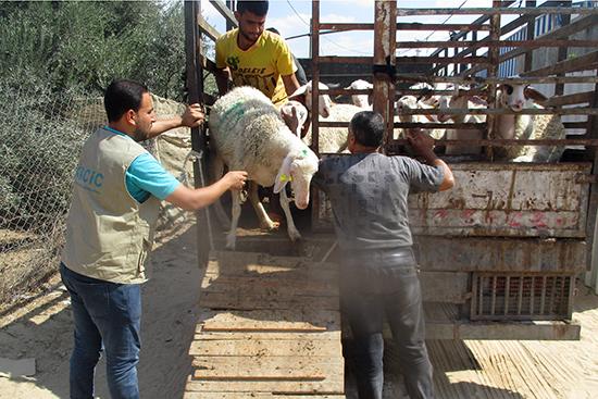 羊の配布を行う業者とスタッフ