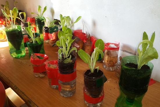 水耕栽培の鉢植えに植えたレタス