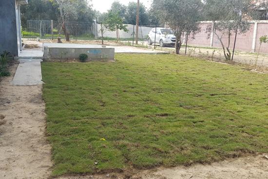 芝生を敷いてきれいになった庭