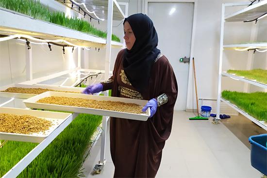 水耕栽培用コンテナで大麦の生育状況をチェックするのが日課