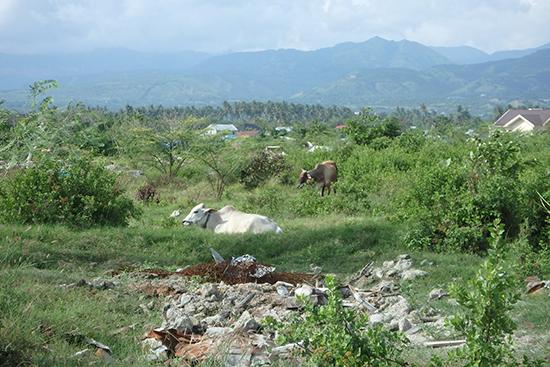この光景が印象的でした。整地された被災地で草木が生え、放牧された牛が草を食べていて、自然の逞しさや何が起きても時間は過ぎていくものだと感慨深い光景でした。