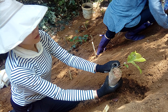 茶木の植樹体験