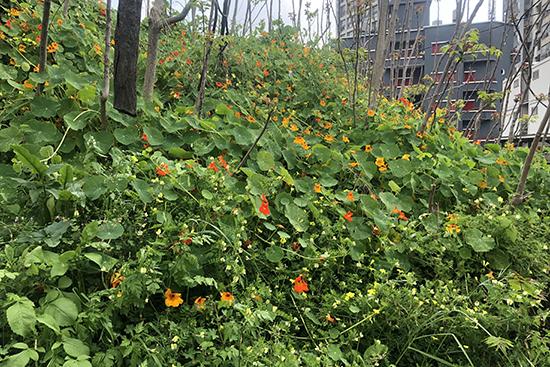 空き地に咲く色とりどりの花(名前は不明)